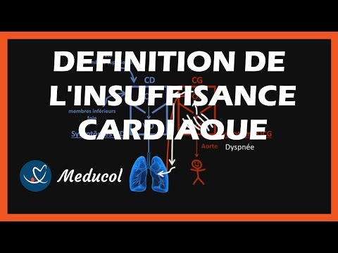 Le tendon du muscle cela