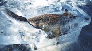 7 ЖИВОТНЫХ, замороженных ВО ВРЕМЕНИ