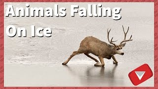 Animals Falling On Ice [Funny] (TOP 10 VIDEOS)