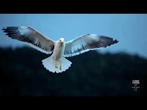 As aves brasileiras pelo olhar do fotógrafo Ricardo Martins