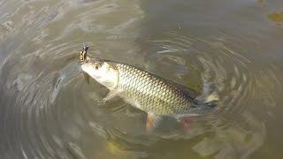 Связать мушку для рыбалки на чехонь