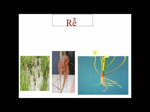 SINH 6: Bài Tổng Kết Về Cây Có Hoa
