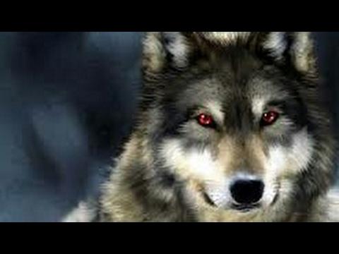 #Paws by Claws ep.1 #kristina kashytska #wolf toys