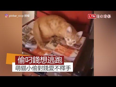 就想養一隻這樣的貓