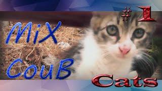 Лучшие приколы с котами # 1   Best ever funny videos with cats   COUB [ MiX CouB ]