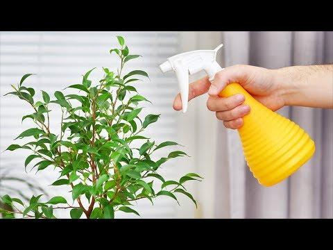 Учимся опрыскивать домашние растения. Как правильно опрыскивать комнатные цветы!