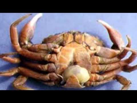 Anit subcutaneous parasito