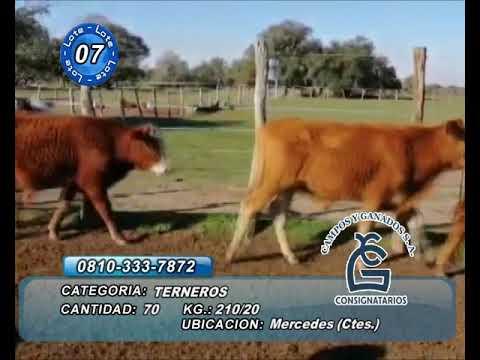 Lote Machos - Mercedes Ctes