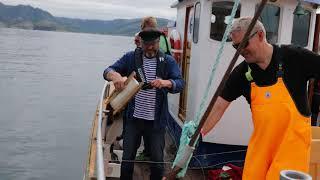 Fiskefestivalen på Bessaker 2018 - fiskekonkurranse