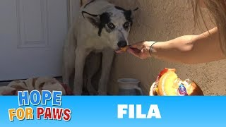 Unique looking injured dog surrenders in exchange for a cheeseburger.
