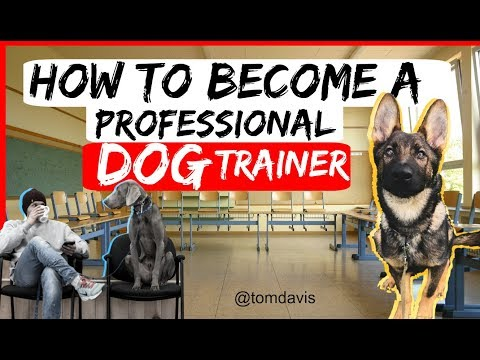 How to become a professional dog trainer? - Everything you need to ...
