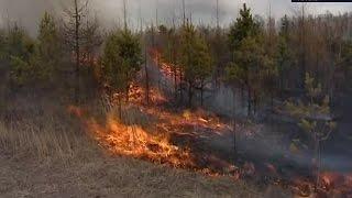 22 лесных пожара ликвидированы в Красноярском крае за минувшие сутки