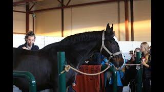 """Семинар """"Мануальная терапия лошадей и биомеханическая стимуляция (Extrazell)."""""""