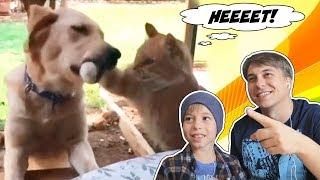 ЗАСМЕЯЛСЯ - ПРОИГРАЛ! Смотрим самое смешное видео про животных и людей! 😺😂
