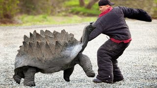 These Are 10 Most Dangerous Turtles And Lizards
