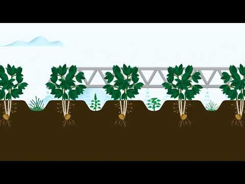 , title : 'Controlling pests and weeds in potato crops | Corteva Agriscience Canada