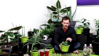A few TIPS for your INDOOR garden