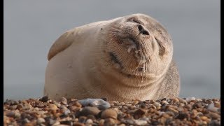 This Seal Can't Stop Sneezing