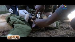 NTV Wild talk S4 E13: