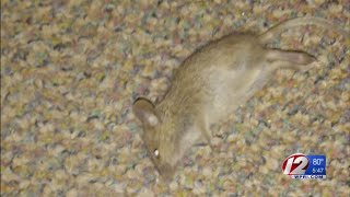 Mouse problem in apartment solved