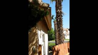 Howto get rid of Rats, Trim Trees away from roof so Rats don't jump on roof call 619-381-0763