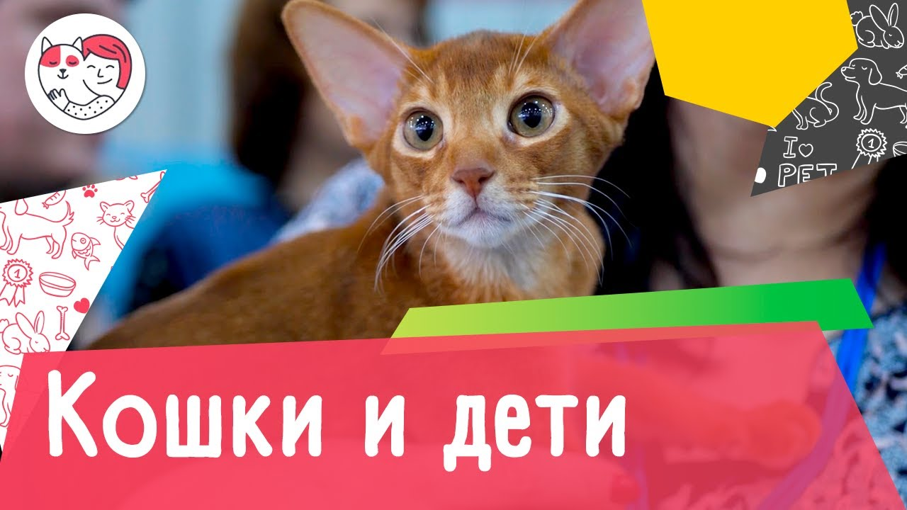 5 пород кошек, которые отлично ладят с детьми