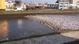 Detik  Detik Gempa & Tsunami Fukushima Jepang 22 November 2016