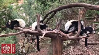 Parque dos Lêmures em Madagascar