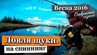 Где лучше ловить щуку весной в ленинградской области
