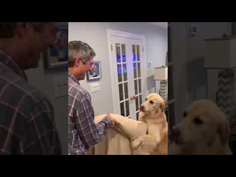 הכלבה-הסבלת הזו עוזרת לבעליה לסחוב את הספה שלה