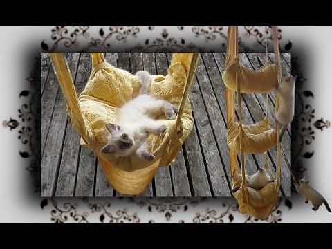 DIY 😻 Hängekissen Schaukel für Katzen   handmade Cats Trapeze