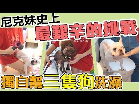 史上最累 一個人挑戰幫三隻狗洗澡