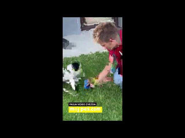 Lajka – Video natečaj 2020 – Revija Moj Pes #Lajka #MojPes