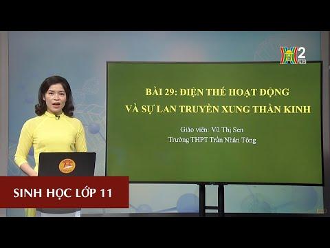MÔN SINH HỌC - LỚP 11 | BÀI 29 | 16H30 NGÀY 04.04.2020 | HANOITV