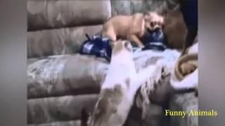 Смотреть онлайн Подборка комичных ситуаций с разными животными