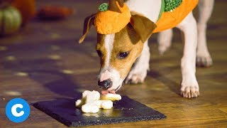 Halloween Dog Costume Party | Chewy.com 2018