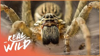 Nature Casts a Spell On These Strange Creatures | Amazing Animals | Wild Things Documentary