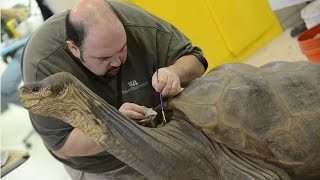 Lonesome George almost ready to return