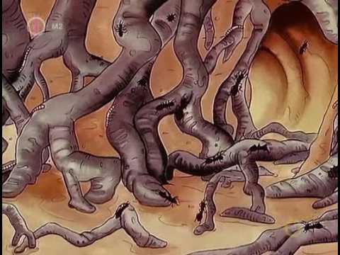 Crevni paraziták kod odraslih