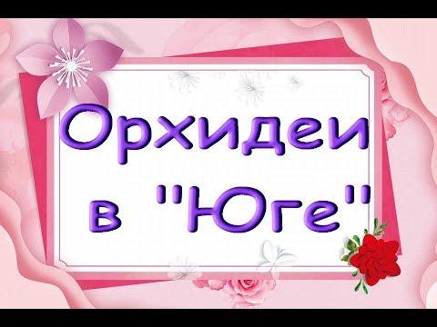 """ЗАВОЗ ОРХИДЕЙ в """"Юге"""":Лиодоро,Каода,хорошие УЦЕНКИ.Привет Максиму и Наташе!"""