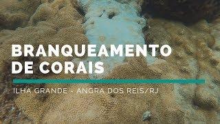 Branqueamento de corais na Ilha Grande/RJ