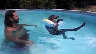 animale relaxare caine la piscina