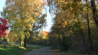 preview picture of video 'Fall Foliage in Bruchsal'