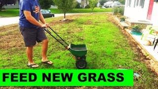 When to fertilize new grass after a renovation