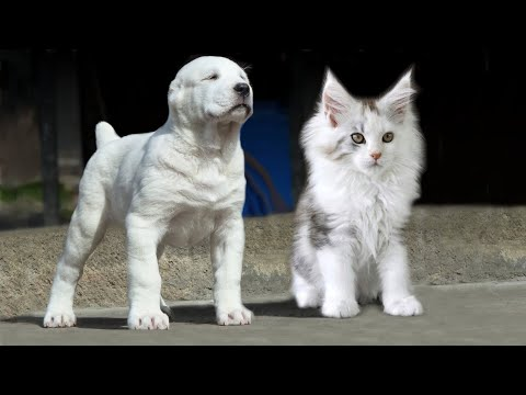 10 Cat Breeds that Act More Like Dogs