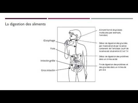 Aider le pancréas dans le diabète