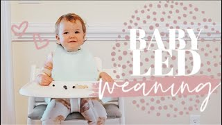 THE BASICS OF BABY LED WEANING | My Experience + Easy Food Ideas! | Becca Bristow