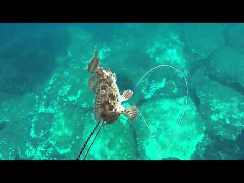 Video con Wexler su pesca