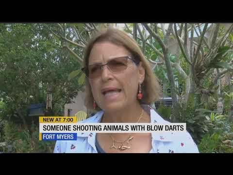 Is this legal? Rabbit shot with dart in Fort Myers yard