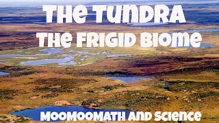 The Tundra Biome Facts